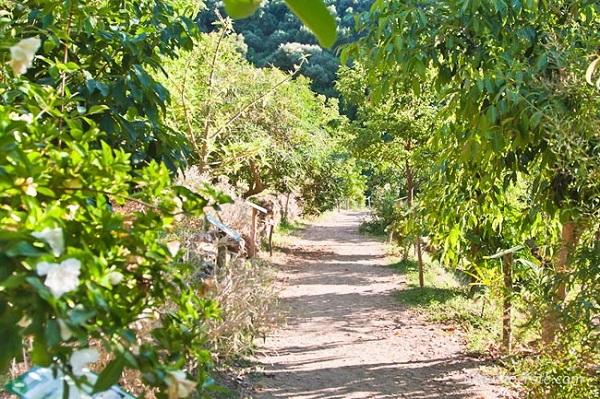 ботанический сад на острове крит, греция
