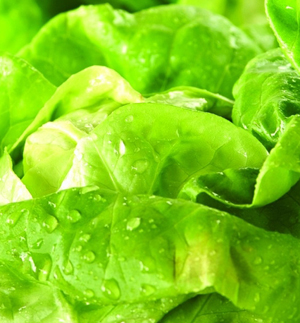 полезные свойства овощей и фруктов,  полезные свойства капусты
