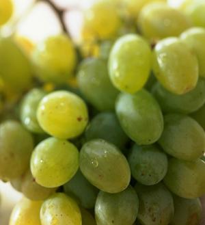 полезные свойства овощей и фруктов,  полезные свойства винограда