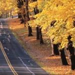 Осень — унылая пора или очей очарованье?