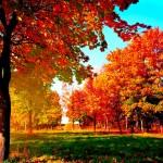 Осенняя природа — унылая пора или очей очарованье?