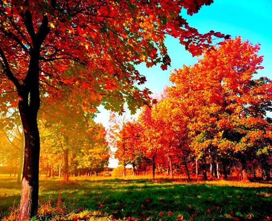 осення природа, осеннее настроение, радость осени
