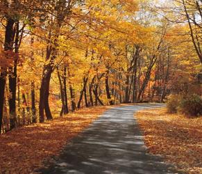 яркие краски осени, осенняя природа