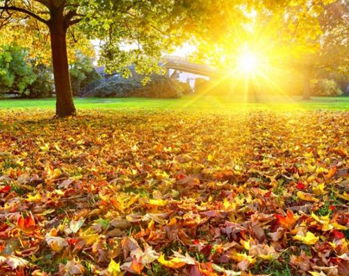 красивые фото осенних листьев