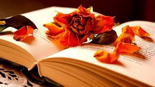 книга осенью