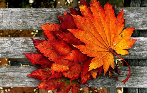 листья осенью, список дел на осень