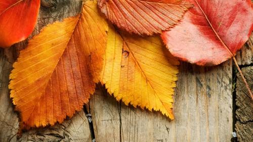 планы и дела на осень