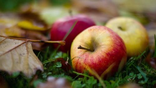 яблоки и осень
