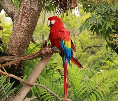 зоопарк на острове Уайт