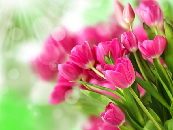 цветы 8 марта (1)
